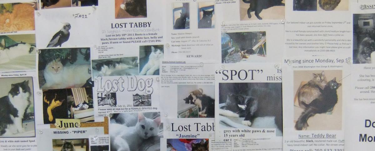 Every Missing Pet Poster Tells Story >> Find Your Missing Pet Animal Control Services